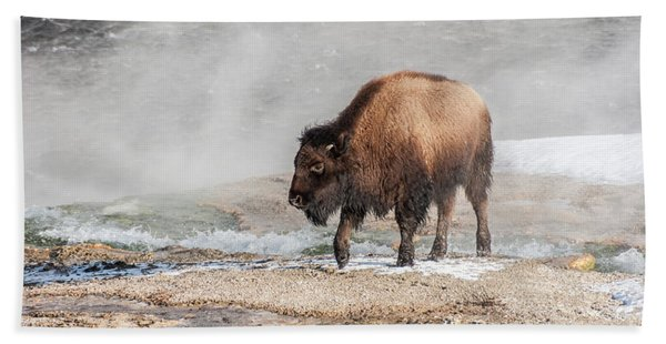 Handsome Young Bison Beach Sheet