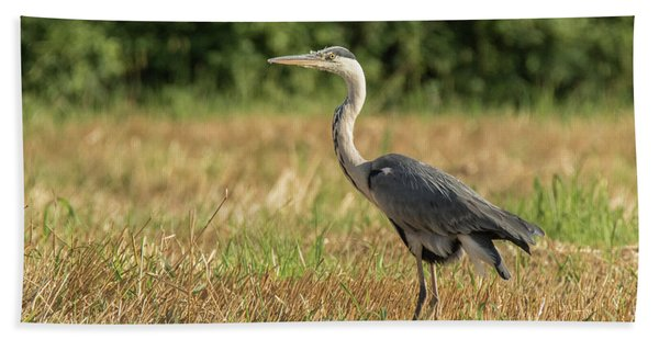 Heron In The Field Beach Towel