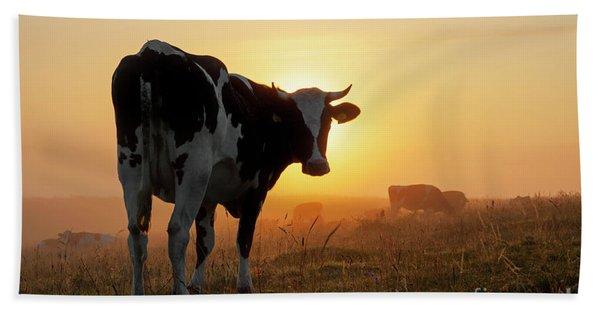 Holstein Friesian Cow Beach Sheet