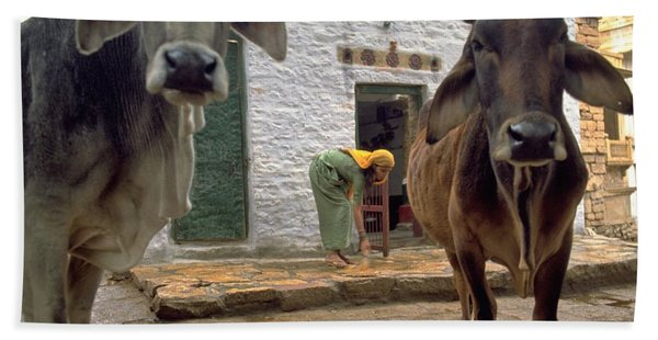 Photograph - Holy Cow by Travel Pics