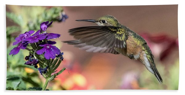 Hummingbird And Purple Flower Beach Towel