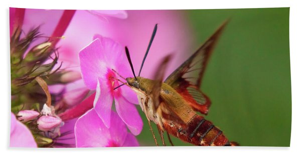 Hummingbird Moth Feeding 1 Beach Sheet