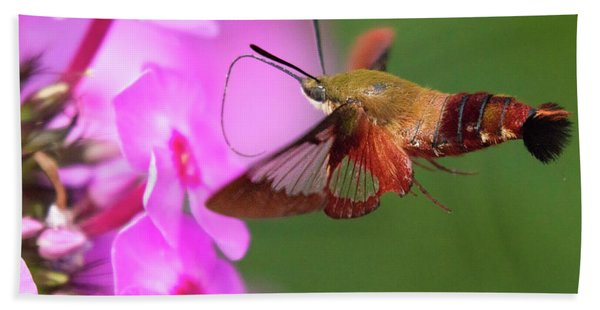 Hummingbird Moth Feeding 2 Beach Sheet