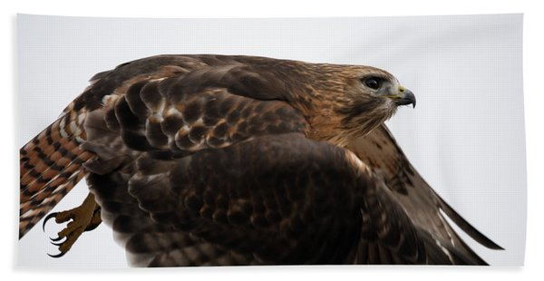 Hybrid Hawk Flyby  Beach Sheet