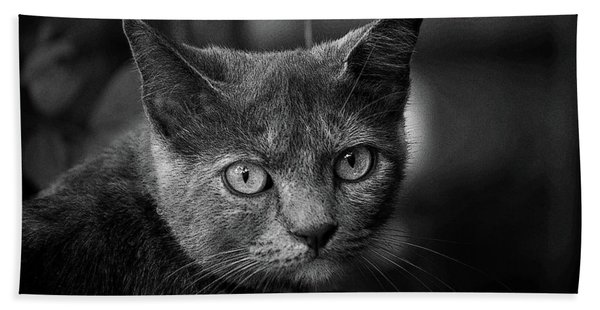 In The Know Pet Art Bw Beach Towel