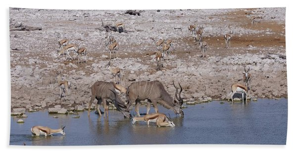 Kudu And Springbok Beach Towel