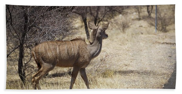 Kudu Crossing Beach Towel