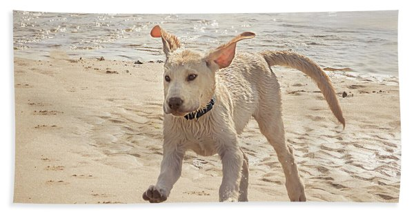 Labrador Jumping Beach Towel