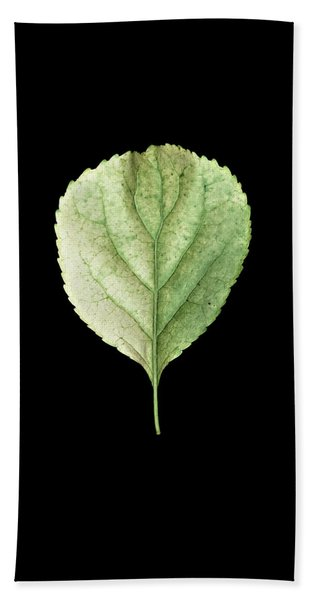 Leaf 19 Beach Sheet
