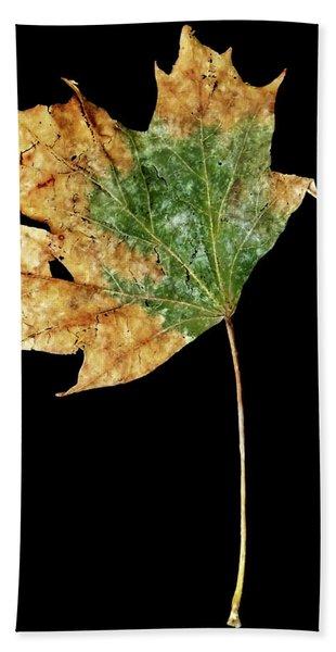 Leaf 9 Beach Sheet