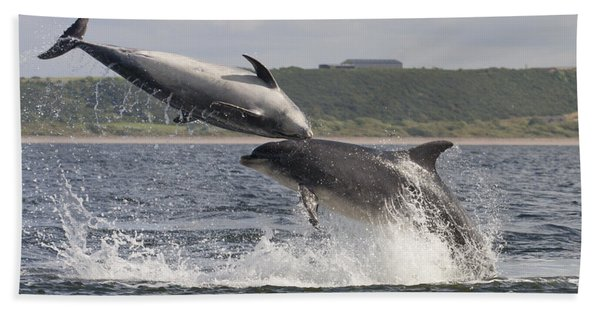Leaping Bottlenose Dolphins - Scotland  #38 Beach Towel