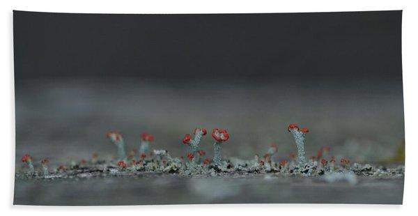 Lichen-scape Beach Towel