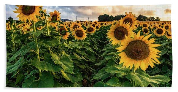Long Island Sunflowers  Beach Towel