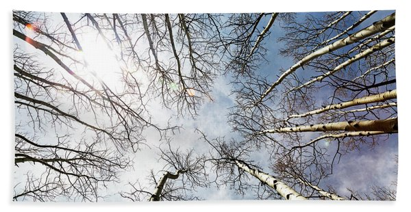 Looking Up On Tall Birch Trees Beach Towel