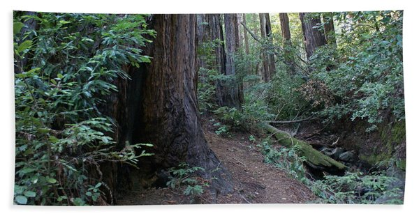 Magical Path Through The Redwoods On Mount Tamalpais Beach Towel