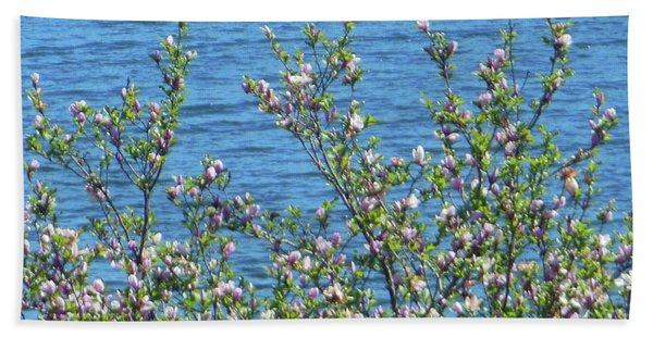 Magnolia Flowering Tree Blue Water Beach Towel