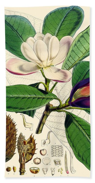 Magnolia Hodgsonii Beach Towel