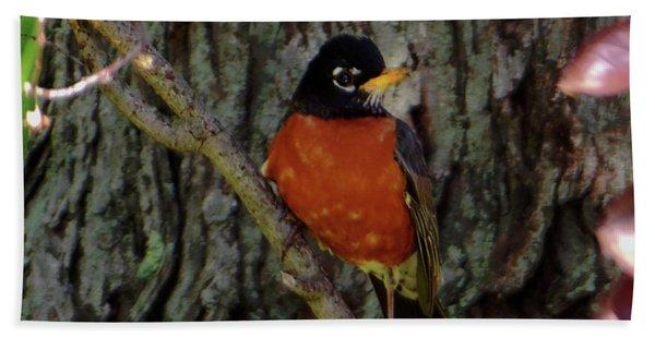 Michigan State Bird Robin Beach Towel