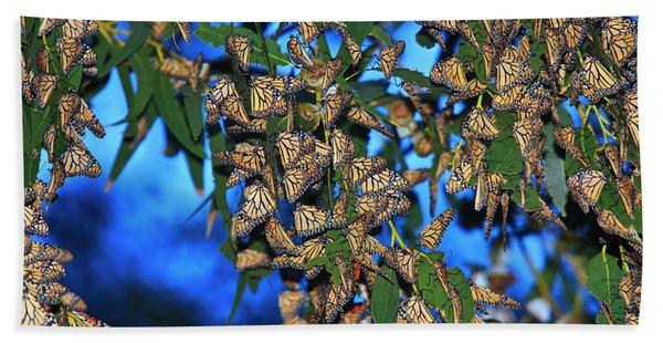 Monarchs Beach Sheet