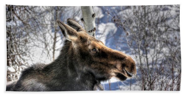 Moose On The Loose Beach Towel