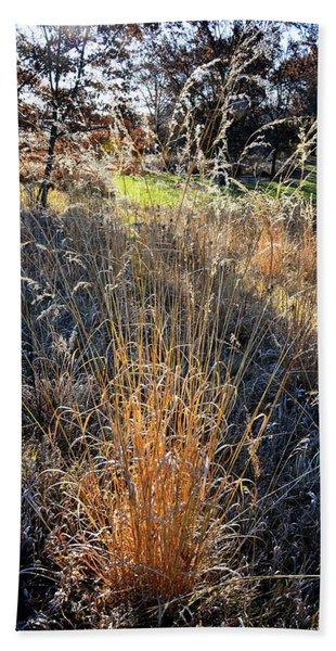 Morning Sun Backlights Fall Grasses In Glacial Park Beach Towel