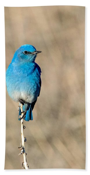Mountain Bluebird On A Stem. Beach Towel