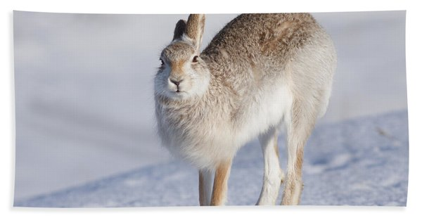 Mountain Hare In The Snow - Lepus Timidus  #2 Beach Towel