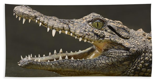 Nile Crocodile Beach Towel