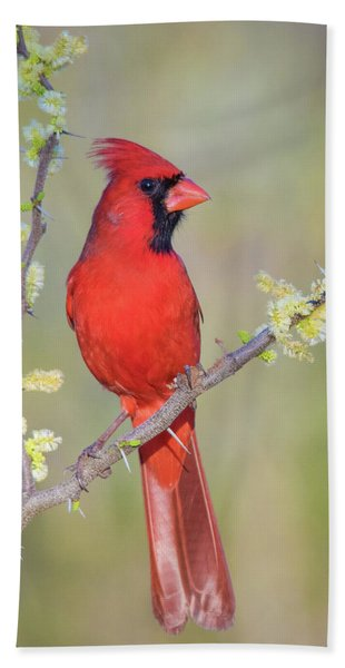 Northern Cardinal Cfh175894 Beach Towel