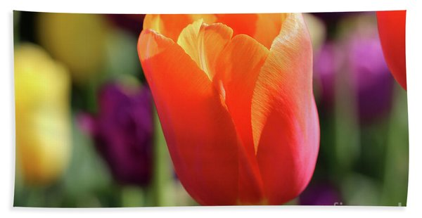 Orange Tulip In Franklin Park Beach Sheet