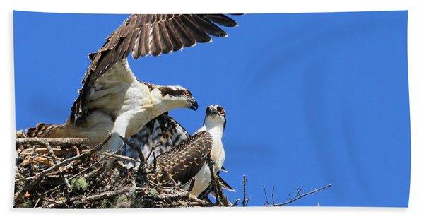 Osprey Chicks Ready To Fledge Beach Towel