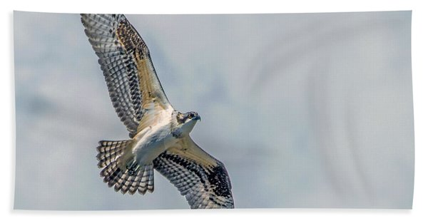 Osprey In Flight Beach Towel