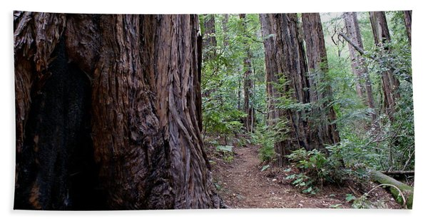 Pathway Through A Redwood Forest On Mt Tamalpais Beach Towel