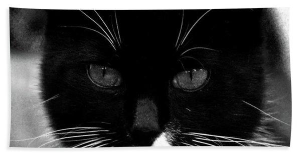 Pet Photography Kitkat Portrait 5 Beach Towel