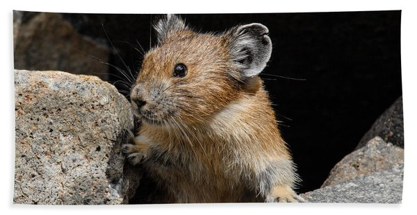 Pika Looking Out From Its Burrow Beach Sheet