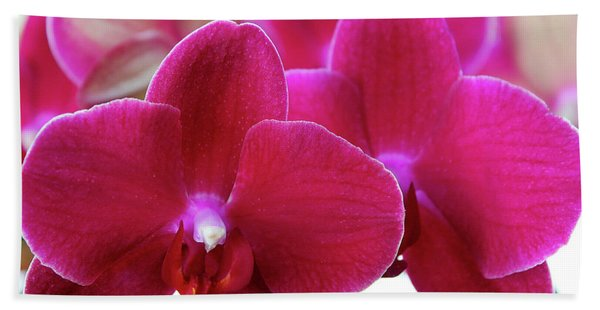 Red Orchid Beach Towel