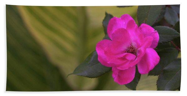 Pink Rose San Antonio Texas River Walk Beach Towel