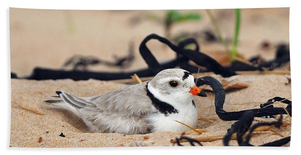 Piping Plover Beach Towel