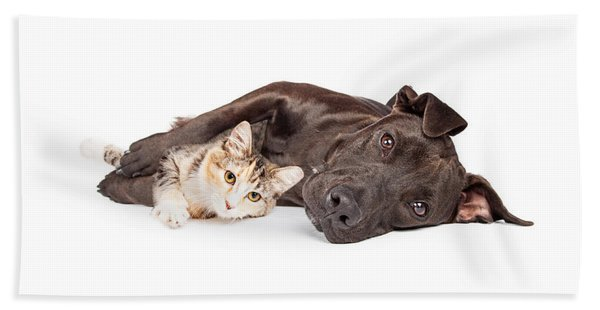 Pit Bull Dog And Kitten Cuddling Beach Towel