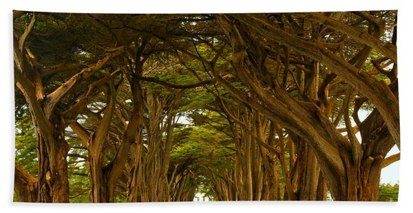 Point Reyes Cypress Tunnel Beach Towel