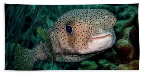 Porcupine Fish Beach Towel