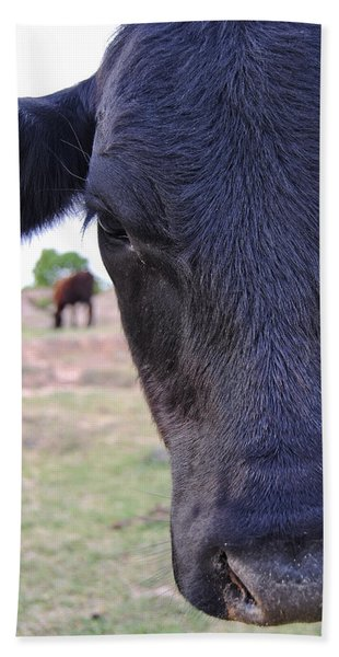Portrait Of A Cow Beach Towel