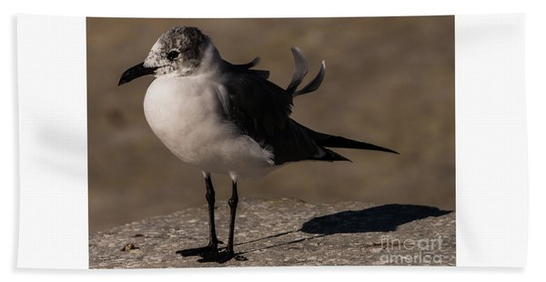 Posing Laughing Gull Beach Towel