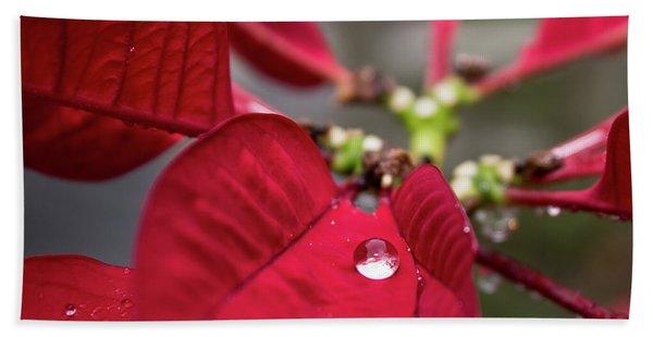 Rain Drop On A Poinsettia  Beach Sheet