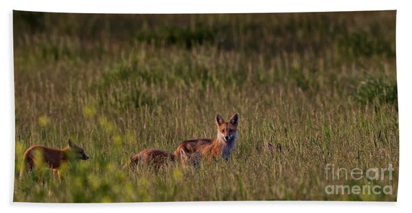 Red Fox Family Beach Towel