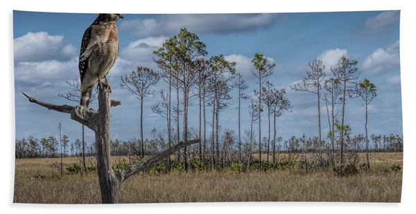 Red Shouldered Hawk In The Florida Everglades Beach Sheet
