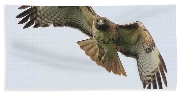 Red Tailed Hawk Finds Its Prey Beach Towel