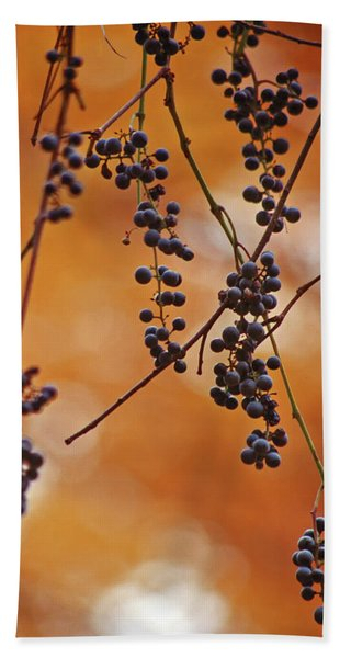 Ripe Wild Grapes  Beach Towel