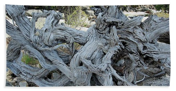 Beach Towel featuring the photograph Roots In Nature by Sean Sarsfield