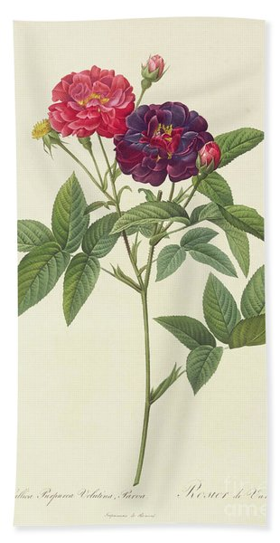 Rosa Gallica Purpurea Velutina Beach Towel